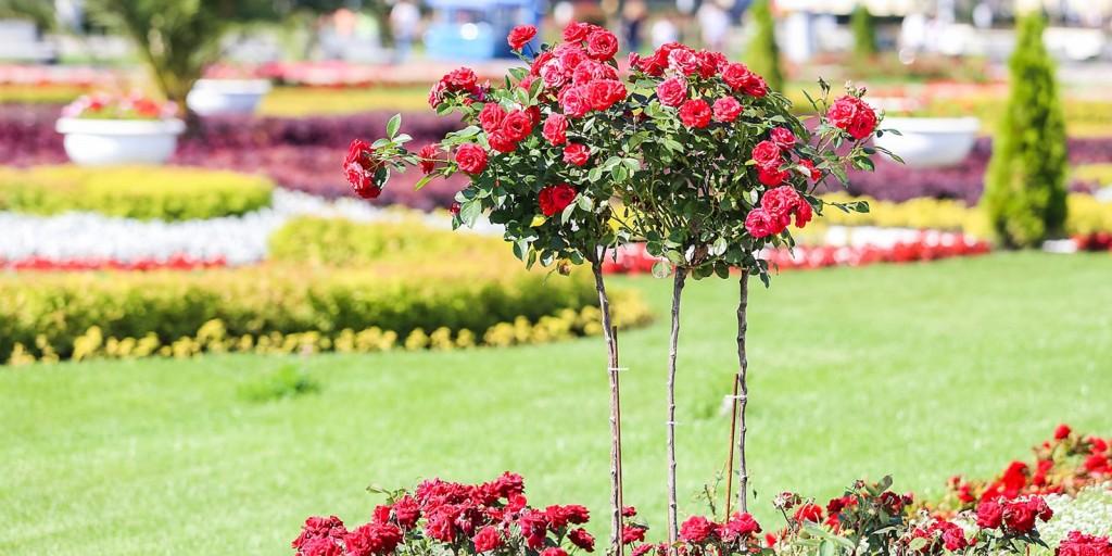 Сады_цветы18